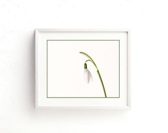 Printable downloadable photography. Spring snowdrop print. 4 jpeg files in various sized and ratios. Wall art, greetings cards, tags etc.