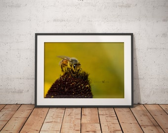 Bee Photo, Insect Images, Macro Photo, Unique Perspective, Professional Photo, Simple Wall Art , Home Decor