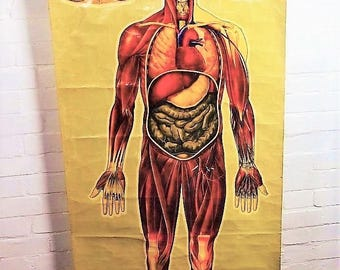 Large full size anatomical medical chart poster St. Johns wall art vintage antique industrial retro