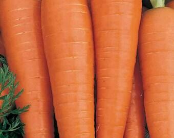 Carrot - Danvers 126 Organic Non-GMO, 120+ Organic seeds,Danver Carrots, Organic garden Seeds, Vegetable Seeds, Organic gardening seeds
