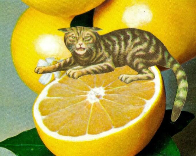 Grapefruit Artwork, Sourpuss Cat Art Collage