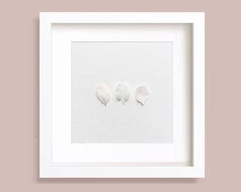 Floral Photography, Three flower Petals, White Blossom, Wild cherry flowers, Gallery Wall Art, Botanical Art Prints, Square Photos, Minimal