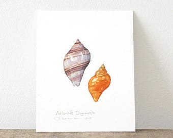 Dogwinkle Shells Original Watercolor Painting, seashell art