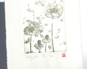 Dandelion - Original Etching