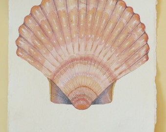 Scallop shell original watercolour illustration painting ocean treasure natural history picture sea creature coastal decor