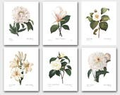 Winter White Flower Wall Art, Set of 6 Botanical Prints (Redoute French Home Decor) -- Camellia, Peony, Lily, Magnolia -- SALE