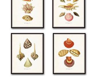 Vintage French Seashell Print Set, Giclee, Art Prints, Nautical Art, Beach Cottage Decor, Coastal Art, Shell Print, Collage, Sea Life