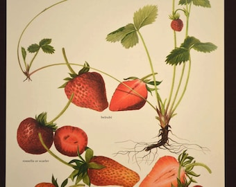 Fruit Wall Decor strawberry wall art | etsy