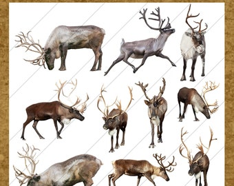 Santa's Reindeer Overlays Collection 1 - For Photographers, Scrapbook, and More. Very High Quality Holiday Clip Art