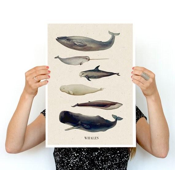 Spring Sale Whales A3 size poster, animal art, Wall art ,Nursery art , Giclee poster, Animal art, poster print PWA218