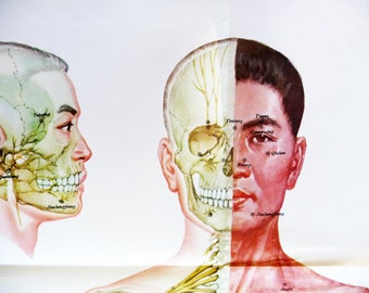 1970 XL Poster Body Parts, Human Anatomy chart, Anatomical Wall Art Home Decor.