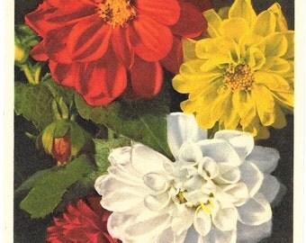 Dahlia Flowers,  ca. 1940 Unused Vintage Postcard, Thor E. Gyger, Switzerland  #729