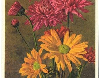 Chrysanthemum, ca. 1940 Unused Vintage Postcard, Thor E. Gyger, Switzerland  #3119