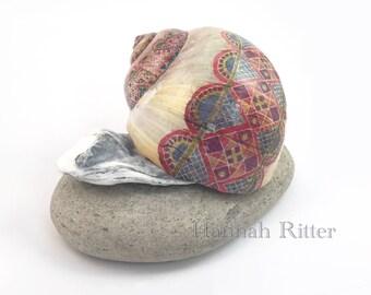 Extra-Large Batik Moon Snail Shell