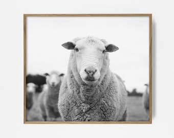 bw sheep, sheep print, sheep art, printable farm print, country print, country art, printable wall art, wall decor, black and white print