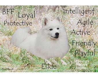 American Eskimo Dog, American Eskimo Dog Gift, American Eskimo Dog Art Print