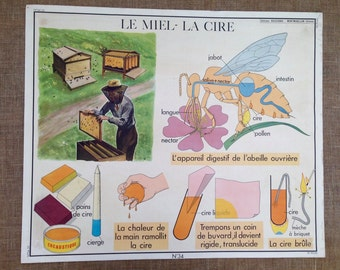 Vintage French Poster, Bee Keeping, Honey, Restaurant, Bees, Oyster, La Meil, L'Huitre, School, Rossignol Collection, 1950s, Retail display