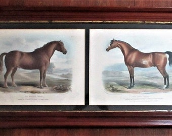 Antique 19th Century Professor Lows Illustrations Suffolk Punch The Race Horse Thoroughbred Stud Engraving Equestrian Art Prints 1841 Framed