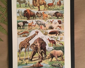 Board naturalist, history & natural science - mammals - Larousse