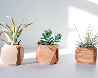 Geometric Air Plant / Succulent Pots - Set of 3 - Walnut & Maple