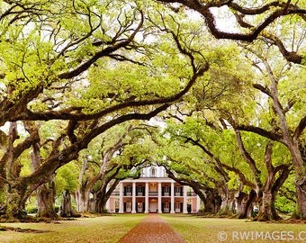 Oak Alley Plantation Louisiana Fine Art Photography Color Photo Print (Unframed, Canvas, Framed, Metal or Acrylic) Large Wall Decor
