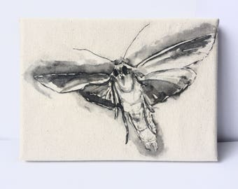 Laser-copy transfer print of moth drawing on canvas