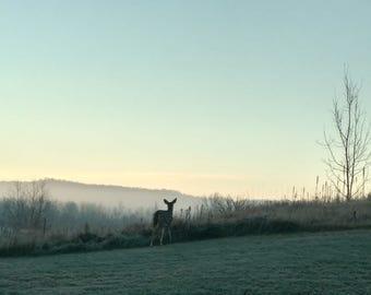 Nature wildlife photography - Deer print - Home decor