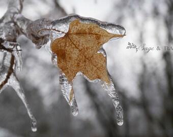 Frozen leaf, maple leaf, Canadian, macro photography, nature photography, woodland, icy, minimalist, winter, dreamy, travel photography