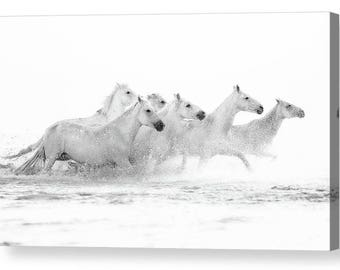 White Sea Horses Photo Canvas Box Art A4, A3, A2, A1 ++