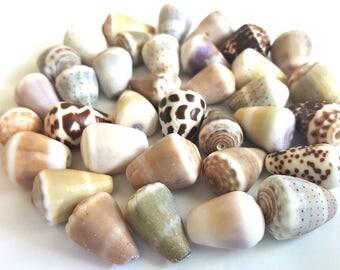 Surf-Tumbled Small Medium Hawaiian Cone Shells FREE SHIP