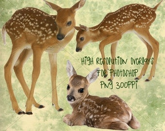 baby fawn deer png overlays for photoshop