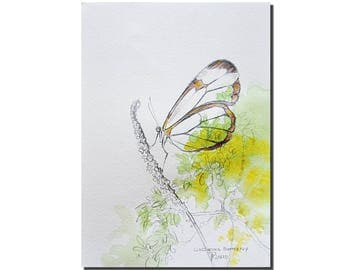 Glasswing Butterfly Painting, Original Graphite Pencil Drawing, Watercolor Painting by Tatjana, Original Art, Mothers Day Gift