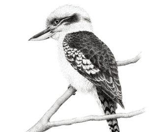 FINE ART PRINT // Kookaburra // Limited Edition // Artwork // Realism // Pen and Ink // Bird Art // Black and White // Drawing