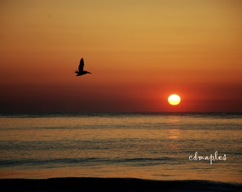 OBX Sunrise with Pelican Photo, Pelican in Sunrise Photo, Sunrise, Pelican, North Carolina Sunrise