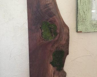 Live edge walnut and moss wall sculpture