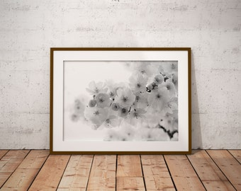 Photography cherry blossom, black and white, digital download