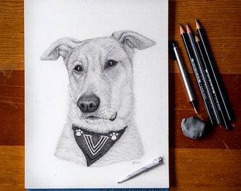 Hand Drawn Pet Portraits