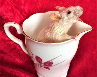 Taxidermy Mouse In A Milk Jug - curio, novelty, weird, gift