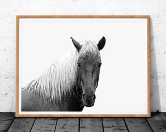 Horse Photography, Black and White Photo, Photography Prints, Icelandic Horse, Digital Download, Horse Print, Large Wall Art Print, Poster