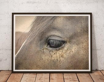 Horse Art Print, Animal Print, Horse Wall Art, Home Decor, Horse Photo Print, Animal Photography - 004