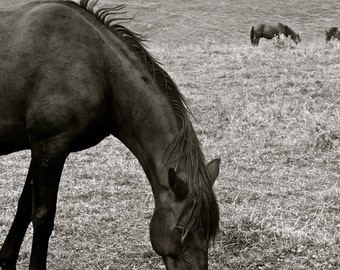 Horses in the Mountains, Republic of Georgia, Black and White