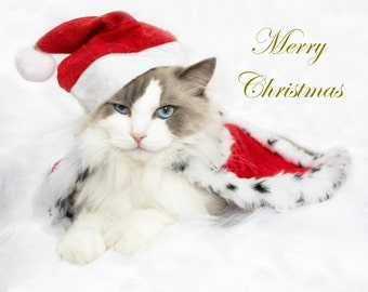Merry Christmas Cat e-Card  - Golden Edition