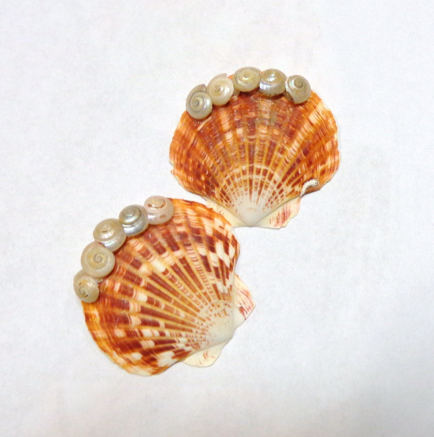 Set of two pc seashell hair clip clams umbonium by for Seashells for hair