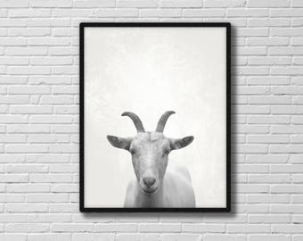 Goat poster, animal poster, wall hanging, animal art, goat, printable poster, animal photography, goat photograph, INSTANT DOWNLOAD