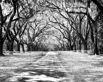 Wormsloe Plantation Savannah GA