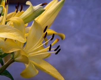 Yellow Lillies, Yellow Flower Art, Wall Decor, Bedroom Decor