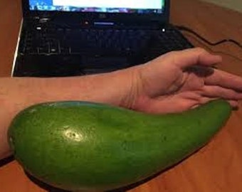 Extremely rare Wilson Popenoe grafted avocado tree from Puerto Rico