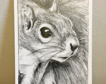 Grey Squirrel - Original Pencil Drawing Illustration on 240 GSM Paper