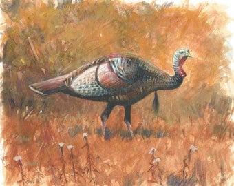 Turkey Stroll
