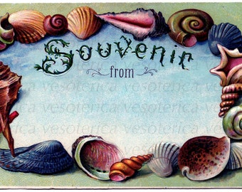 Sea Shell Postcard Digital download vintage look postcard set of three clip art seashell ephemera printable